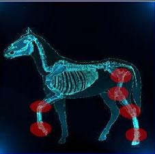 poly artrose